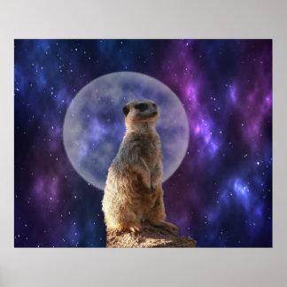 Meerkat On Night Watch, Poster