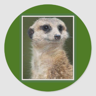 Meerkat on the look out classic round sticker