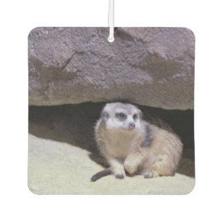 Meerkat Photo Car Air Freshener
