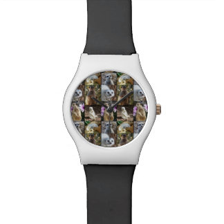 Meerkat Photo Collage Ladies Colorful May Watch