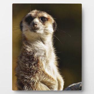 Meerkat Plaque