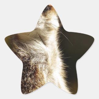 Meerkat Star Sticker