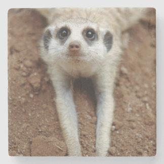 Meerkat (Suricata Suricatta) Cooling Down Stone Coaster