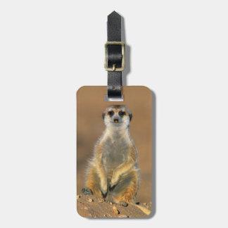 Meerkat (Suricata Suricatta) Sentinel At Den Bag Tag