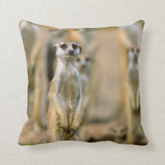 Meerkat (Suricata Suricatta) Sentinels, Karas 2 Cushion
