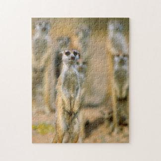 Meerkat (Suricata Suricatta) Sentinels, Karas 2 Jigsaw Puzzle
