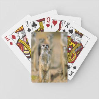 Meerkat (Suricata Suricatta) Sentinels, Karas 2 Playing Cards