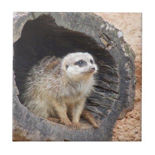 Meerkat Tile