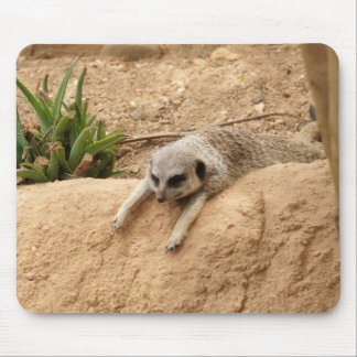 Meerkat to Hot Mouse Pad