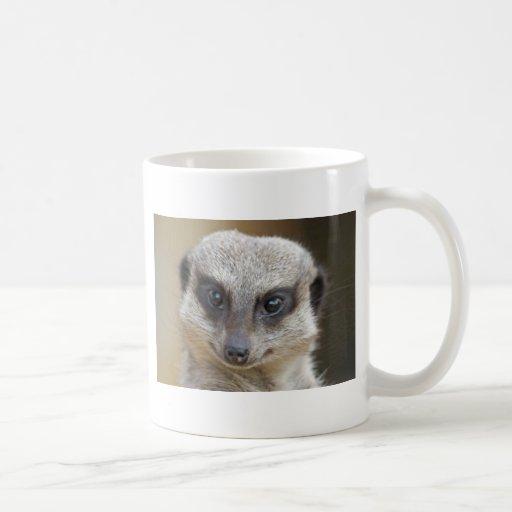 Meerkat Up Close Coffee Mugs