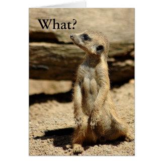 Meerkat ... WHAT? Card