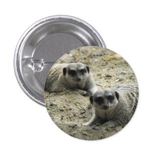 Meerkats Button
