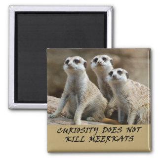Meerkats fridge magnet