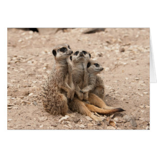 Meerkats In A Huddle Greeting Card