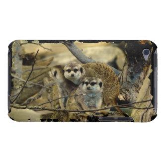 Meerkats, Mongoose, African Wildlife, Animals iPod Touch Case-Mate Case
