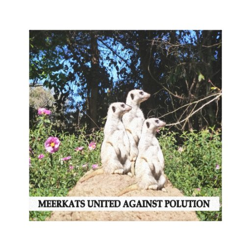 Meerkets Against Polution Gallery Wrapped Canvas