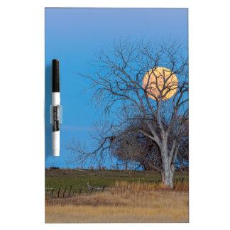 Mega Beaver Moon Dry Erase Board