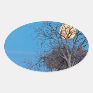 Mega Beaver Moon Oval Sticker