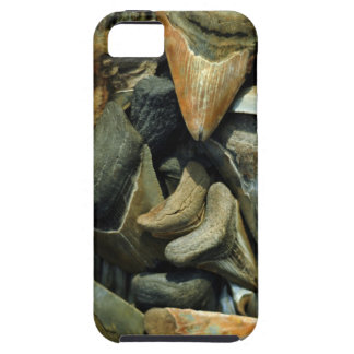 Megalodon Fossil Shark Teeth for Iphone 5 iPhone 5 Covers