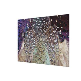 Melanistic Pheasant Feather Abstract Canvas Print