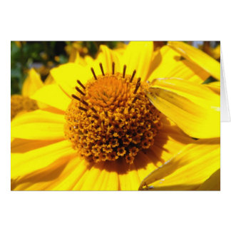 Mellow Yellow | Greeting Cards