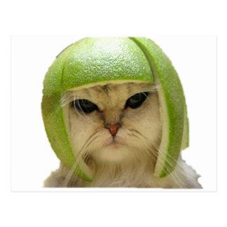 melon cat postcard