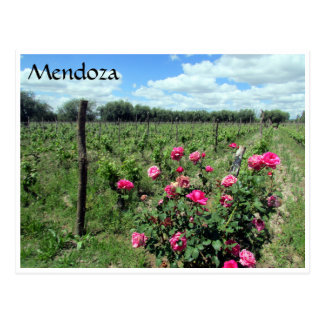 mendoza wine roses postcard
