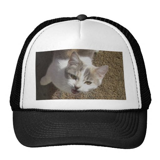 MEOW! HAT