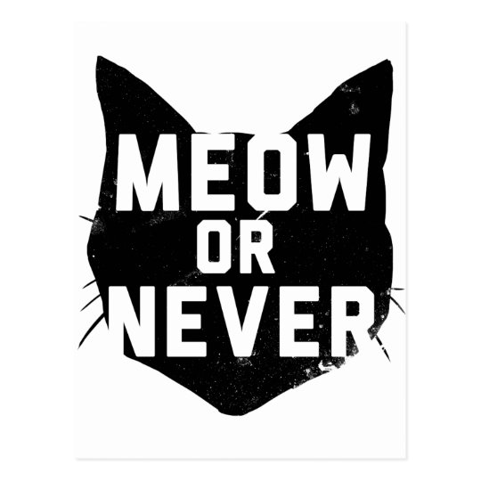 Meow or Never Postcard