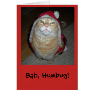 Meow-y Little Christmas Card