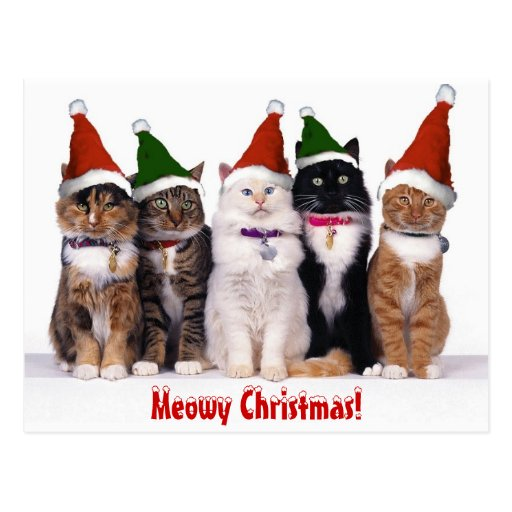 """""""Meowy Christmas!"""" Cats Post Cards"""