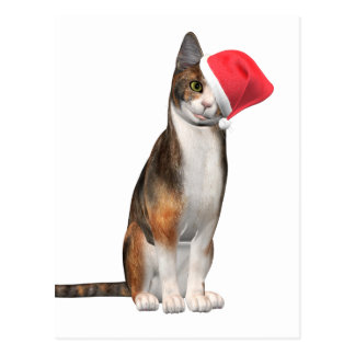 Meowy Christmas with a playful cat in a hat Postcard