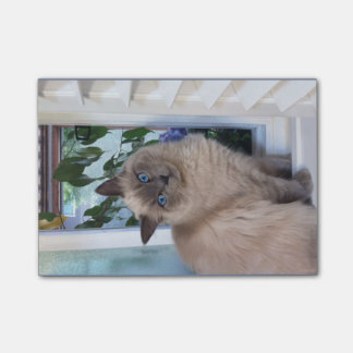 MEOWY-WOW, A Sweet Cat on in the window Post-it Notes