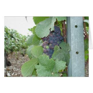 Mercier Vineyard Card