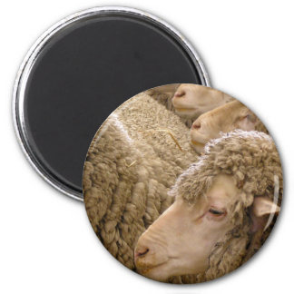 Merino sheep fridge magnet