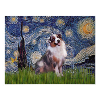 Merle  Aussie Shep  - Starry Night Poster