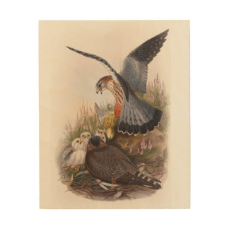 Merlin Falcon John Gould Birds of Great Britain Wood Prints
