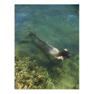 Mermaid swimming underwater postcard
