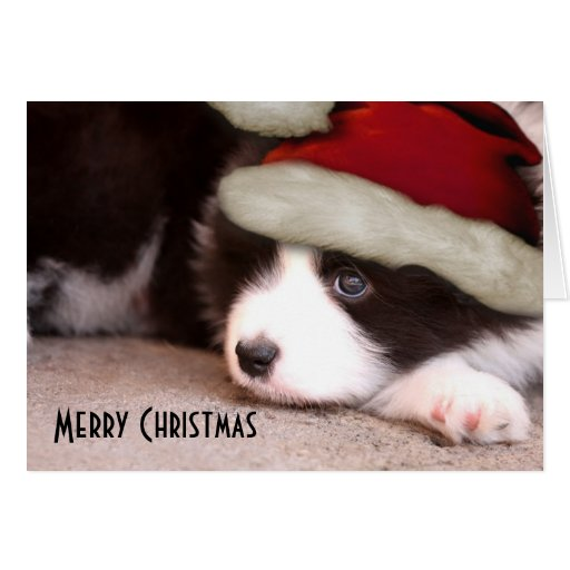 Merry Christmas Baby Border Collie - Santa hat Greeting Cards