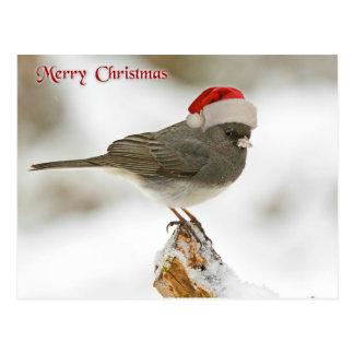 Merry Christmas Bird Postcard