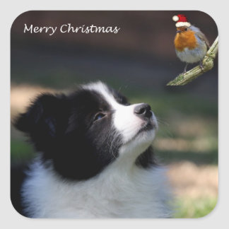 Merry Christmas Border Collie and Robin Square Sticker
