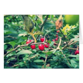 Merry Christmas: Buried Berries Card