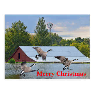 Merry Christmas Canada Geese Landing On The Pond Postcard