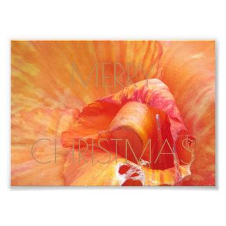 Merry Christmas Floral Orange Flower Photography Photo Print