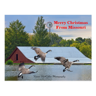 Merry Christmas From Missouri Canada Geese Landing Postcard