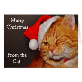 Merry Christmas from the Cat Card