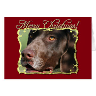 Merry Christmas German Shorthaired pointer dog Card