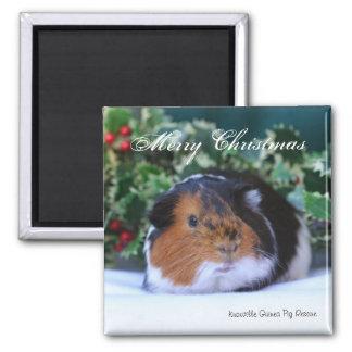 """""""Merry Christmas"""" Guinea Pig Magnet"""