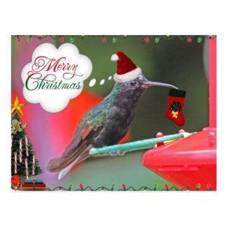 Merry Christmas Hummingbird Postcard