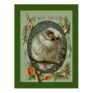 Merry Christmas Owl Postcard